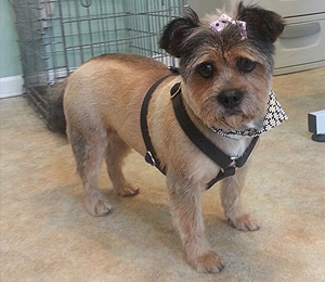small dog with bandana and bow